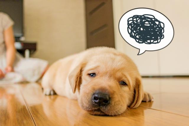 元気ない 犬 避妊手術後