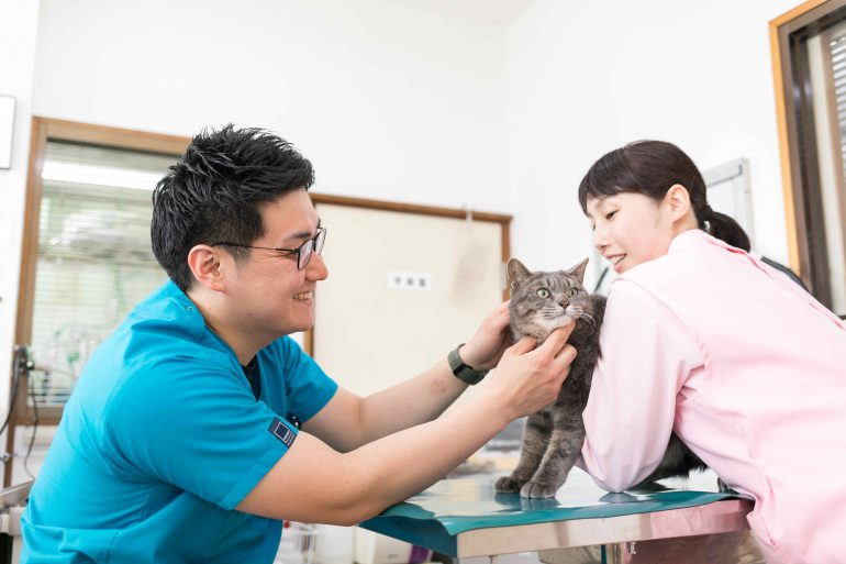 動物看護士と獣医師