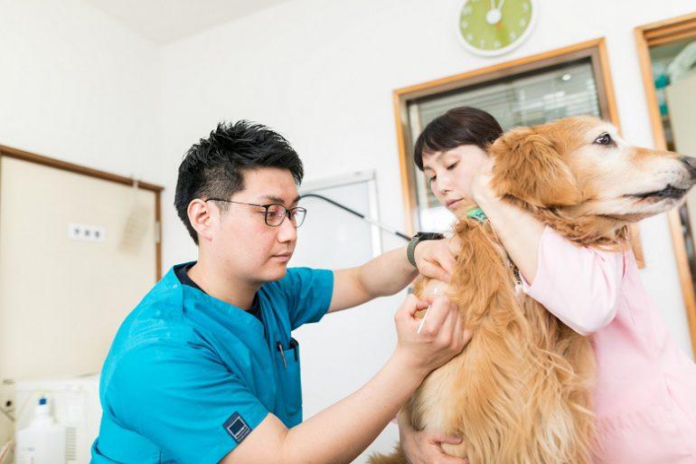 犬の皮膚の検査