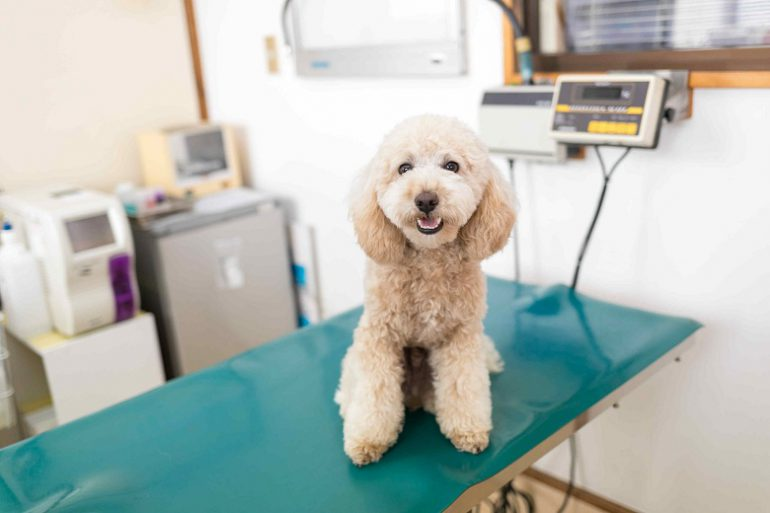 犬のよくある病気